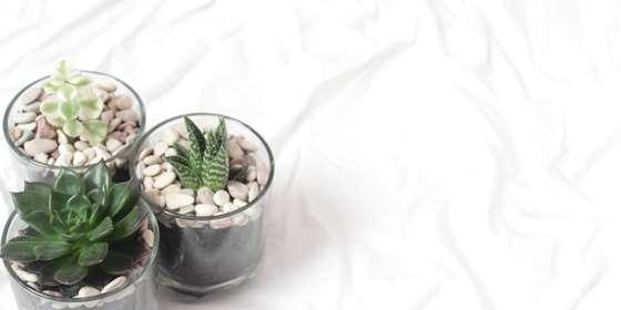 foto-sukulen-bandung-abane-succulent_598-r1vk8QOy8.jpg