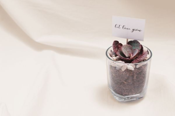 Basic glass planter