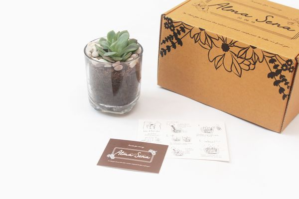 Signature DIY glass planter