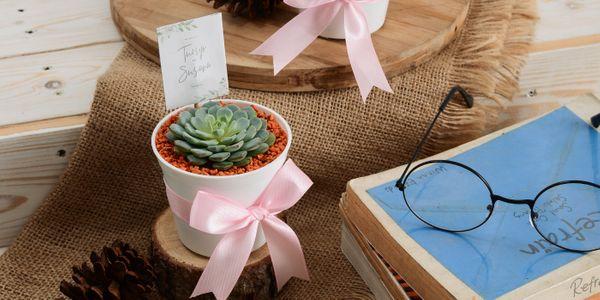 Souvenir Tanaman Hias Sukulen Kemasan Pot Putih
