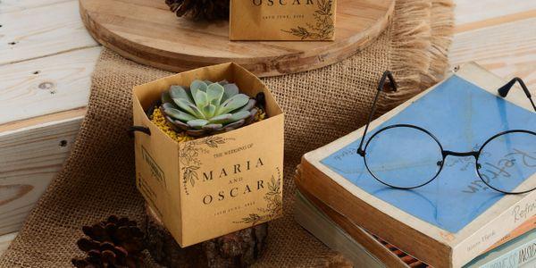 Souvenir Tanaman Hias Kemasan Paperbag