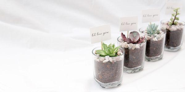 ABANE Succulent Basic Glass Planter
