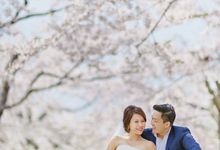 Full Bloom Hokkaido Sakura in Spring-Prewedding Overseas by John15 Photography
