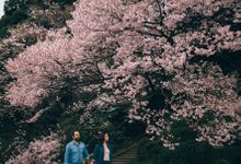 Casual Spring Stroll Among Sakura in Tokyo Japan by fire, wood & earth