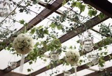Canopy by Ciao Ristorante